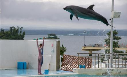 Dolphin Shows Might End in Switzerland