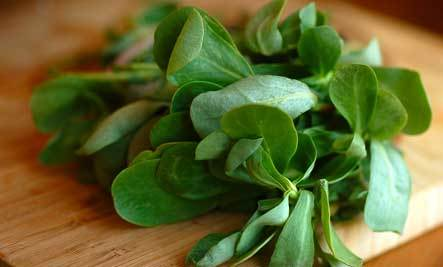 5 Nutritious Edible Weeds