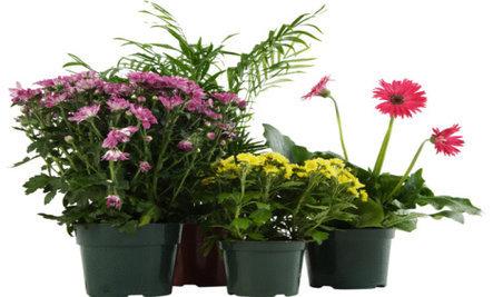 10 Houseplants That Clean the Air