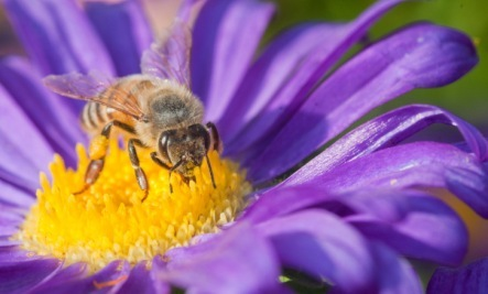 10 Ways to Save the Bees