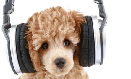Does Noise Pollution Affect our Pets?