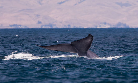 More Marine Mammals Potentially Hurt by Navy