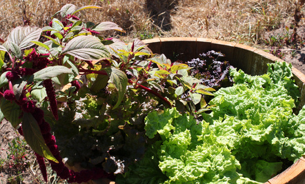 How to Grow Pounds of Food in a Tiny Garden