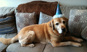 Do You Celebrate Your Pet's Birthday?