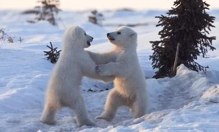 Cute Baby Arctic Animals