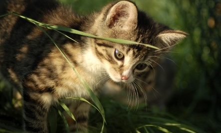 Heat Stroke Signs in Cats: What to Do