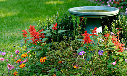 Wonderful 5 Benefits Of Adding A Birdbath To Your Garden
