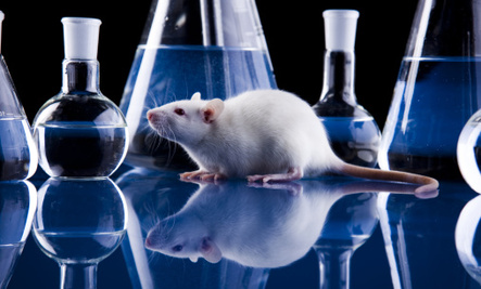 Opposition to Animal Testing on the Rise