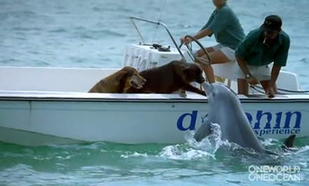 Dog & Dolphin Kiss (Amazing Video)