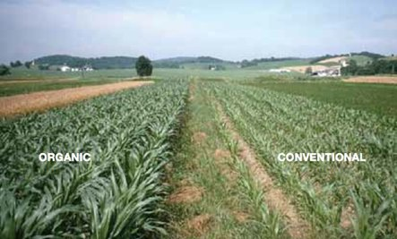 Organic Farming vs. Industrial Agriculture: Which Method Wins?