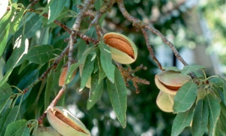 15 Ways to Power Up with Almonds