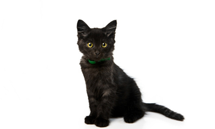 Why You Should Adopt a Lucky Black Cat | Care2 Healthy Living