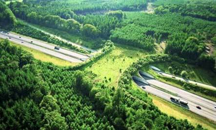7 Amazing Overpasses for Animals
