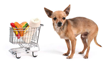 Dogs at Grocery Stores: Yea or Nay