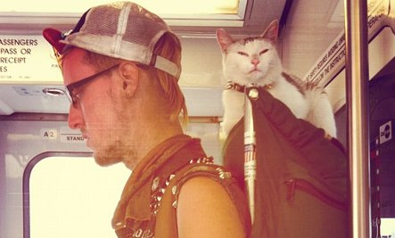 Punk Feline Rides Public Transit (Photo)