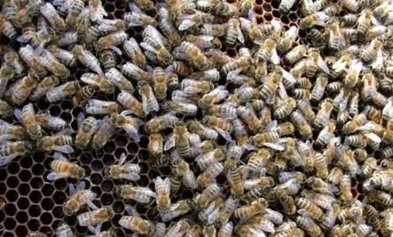The Bee Swarm
