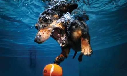 Underwater Dog Photographer Helping Shelter Pets
