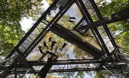 5 Images of Incredible u201cCanopy Walksu201d : canopy walks - memphite.com