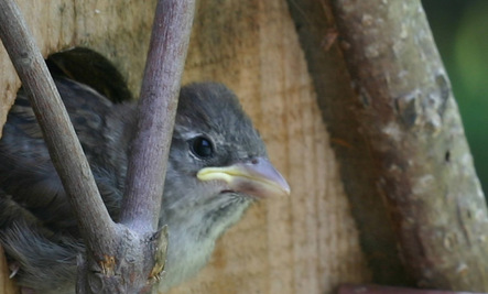 Habitat Fragmentation Is for the Birds