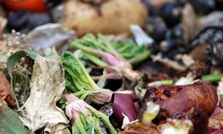 Why Aren't We Addressing the Food Waste Problem?