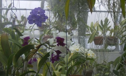 5 Simple Ways to Keep an Orchid Alive & Thriving