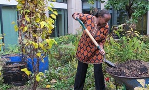 Tree Grows in Arlington for Wangari