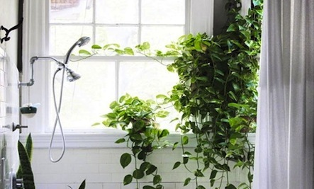 vines the perfect plant for the indoors - House Plants Vines