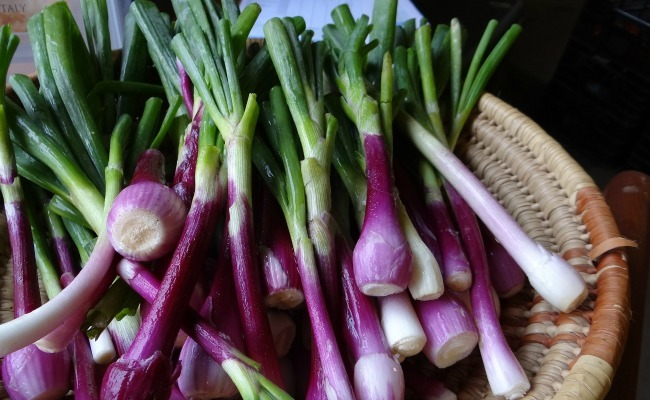 Sexual health benefits of onions for beauty