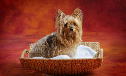 Most Pampered Pets Of All Time Care2 Healthy Living
