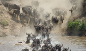 8 Incredible Animal Migrations (Slideshow)