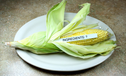4 Potential Health Risks Of Eating GMO Foods - Care2 Healthy ...