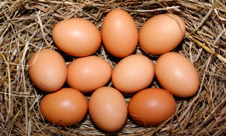 Image result for Organic Eggs