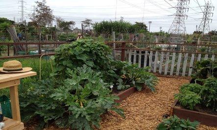 5 Tips for Starting a Vegetable Garden