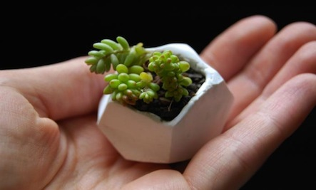 A DIY Mini Planter for Succulents