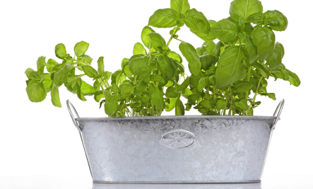 3 Easy Small Herb Garden Ideas Care2 Healthy Living