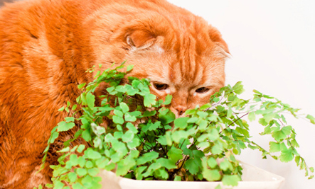 Top 10 House Plants that Clean the Air