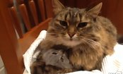 Kitten Gets Cuddled By Mom (Video)