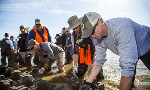 Volunteers Rebuild Ocean Reefs in 'Sweet Home Alabama'