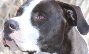 Colorado Dog Shooting Spurs Legislative Action