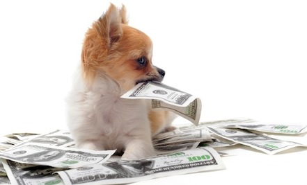 Η γάτα ή ο σκύλος  έχει λιγότερα έξοδα;