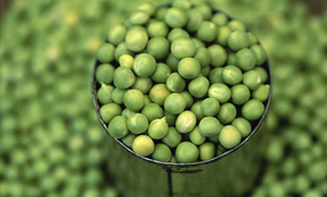 12 Ways to Use Fresh Peas