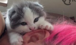 Kitten Eats Ears for Wake-Up-Call (Video)