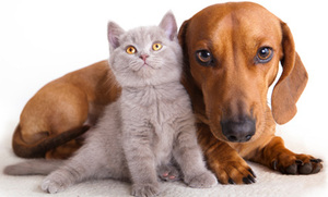The Test Your Pet Should Take (Video)