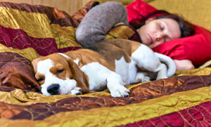 Do Your Pets Sleep With You?