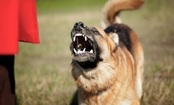 Top 10 Cities with Dog Attacks on Postal Workers