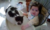Cat Play Fights Baby (Video)