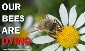 7 Simple Ways To Help Honey Bees
