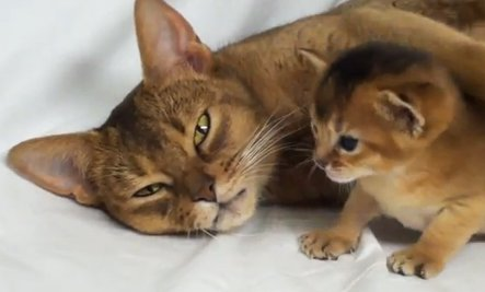 Kitten & Mother Love (Video)