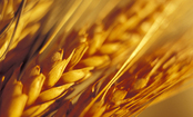 6 Myths about Gluten-Free Diets (Slideshow)