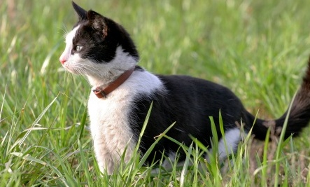 Cat Skins Sold in Online Auction